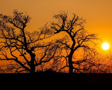 Silhouette of park trees at sunset